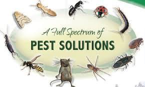 Pest Solutions Logo